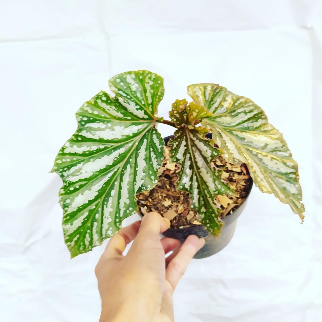 paketan 10 tanaman