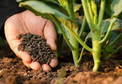 500g 100% organic fertilizer for soil garden soil plants