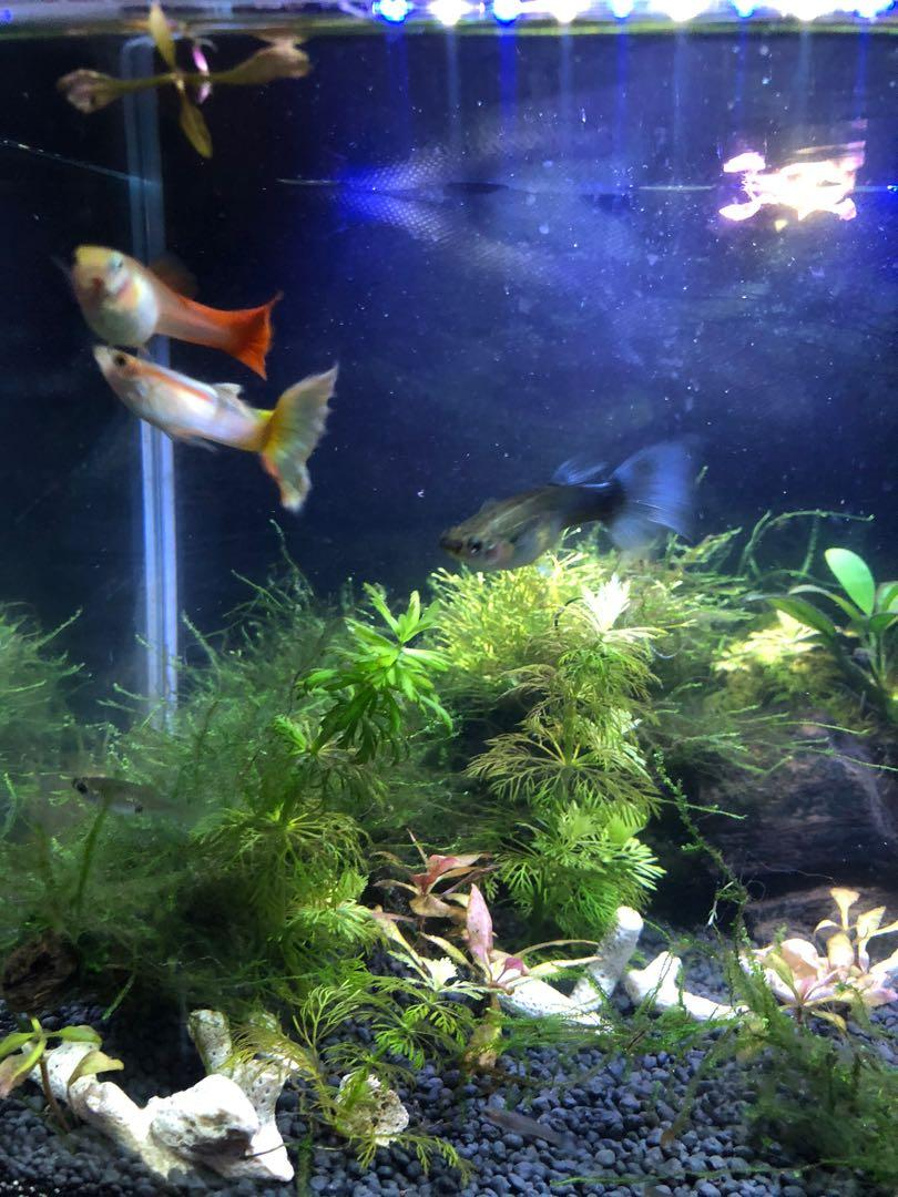 AQUARIUM SUPPLIES AND FISH EVERYTHING NEED GONE ASAP
