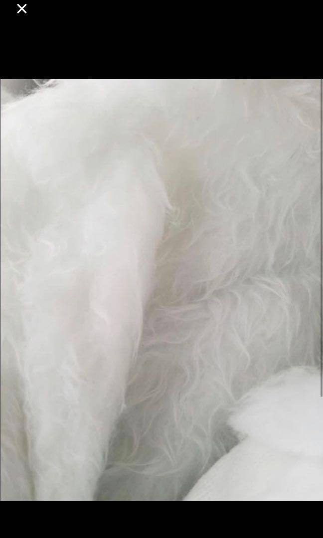 婚後物資:毛毛地毯