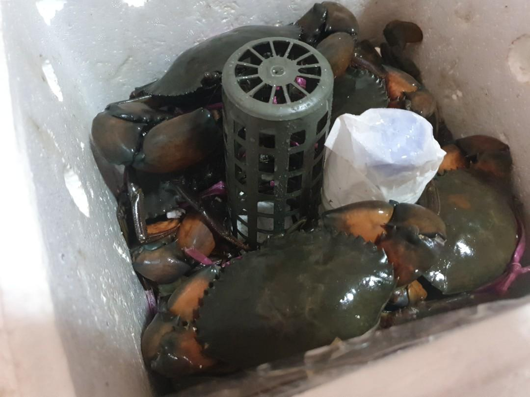 Live mud crab for sale at low price !!!