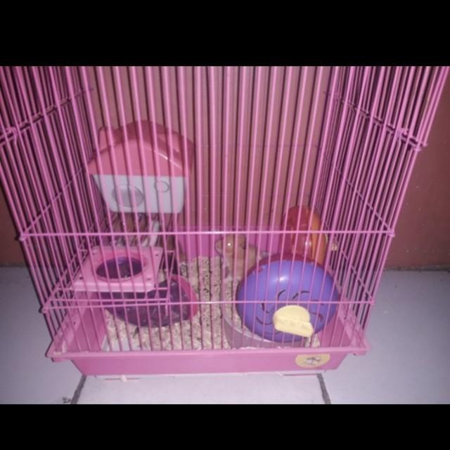 Kandang Hamster+3anak hamster syrian