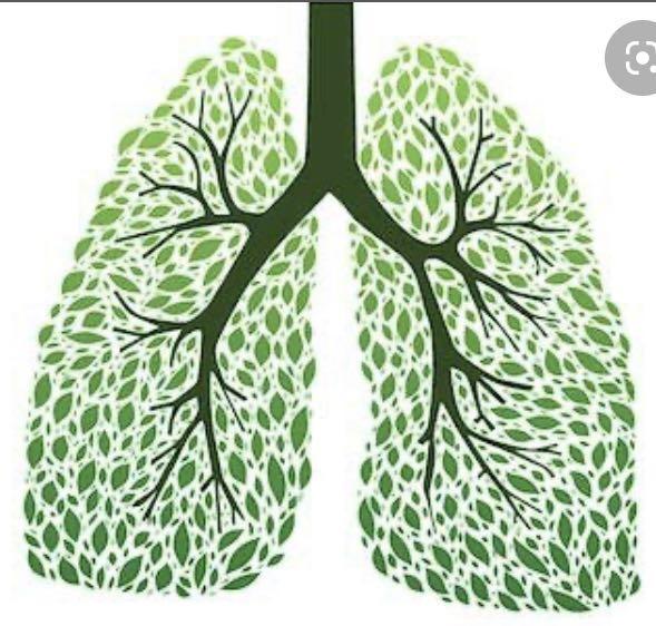 肌筋膜理療-深層清理肺部排毒