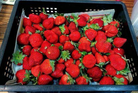 """水果中的紅寶石 """"大湖草莓""""💖草莓季到來💖最低訂購量7籃"""