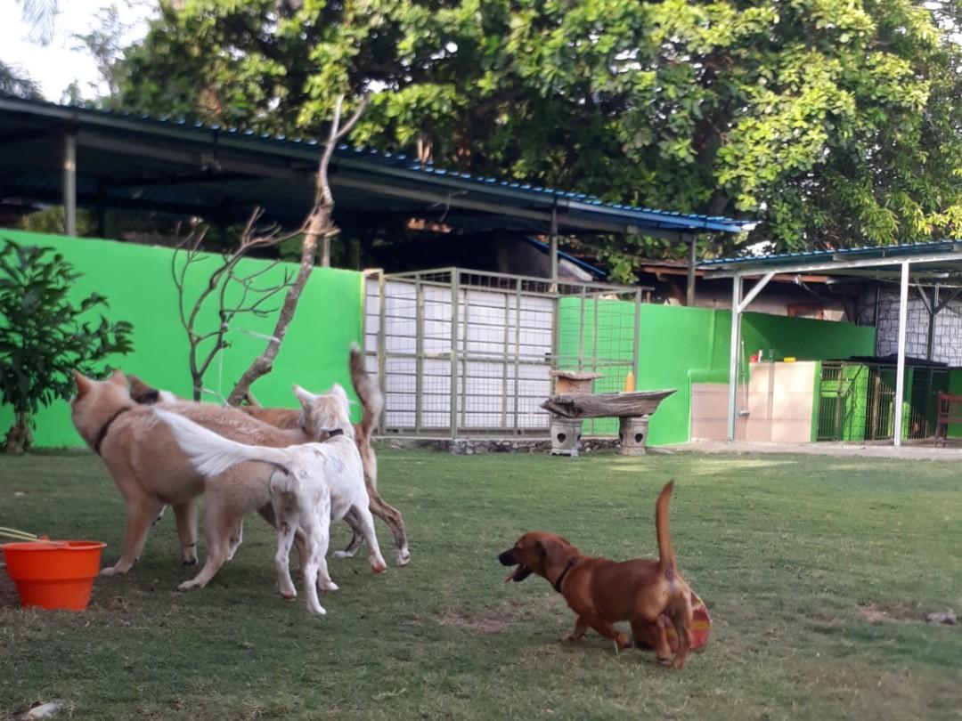 Penitipan Anjing  Pole Dog's Stay Bali