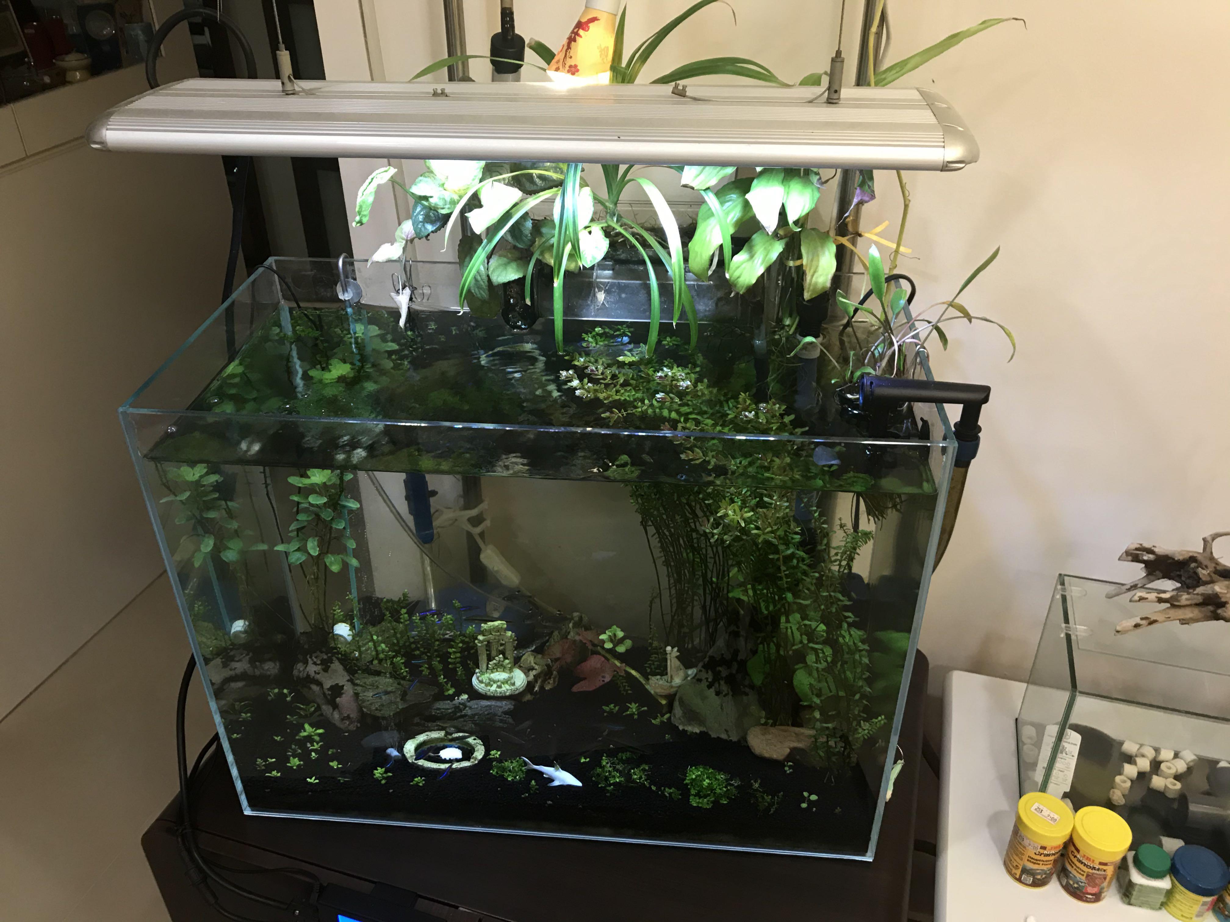 Fish Tank Set & Aquatic Plants