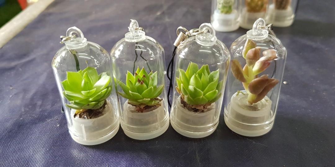 Plant - Live Succulent / Cactus Keychain (3 for $10)