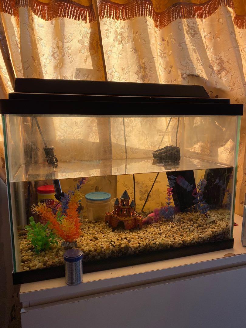 20 Gallon Fishtank, filter, rocks, decor, food, heater, and more
