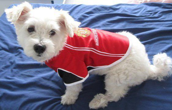 Manchester United S Dog Jersey Pet Supplies For Dogs Dog Accessories On Carousell