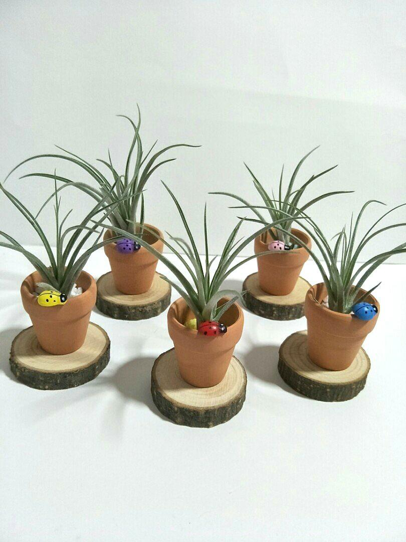 Mini Air Plant Pot Miniature Figurine Ornament Tillandsia Display Terrarium Decoration For Home Office Gift Gardening Plants On Carousell
