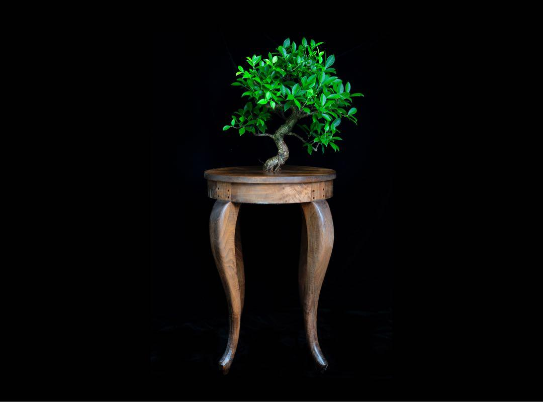"Bonsai On A Block ĸ‰äº"" Gardening Plants On Carousell"