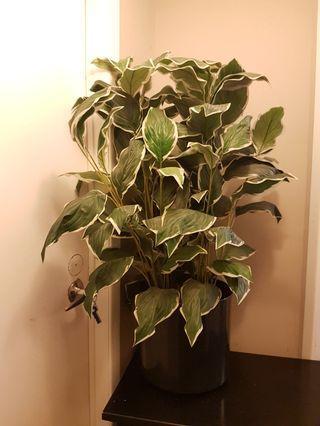 Fake / Artificial Plant / Tree