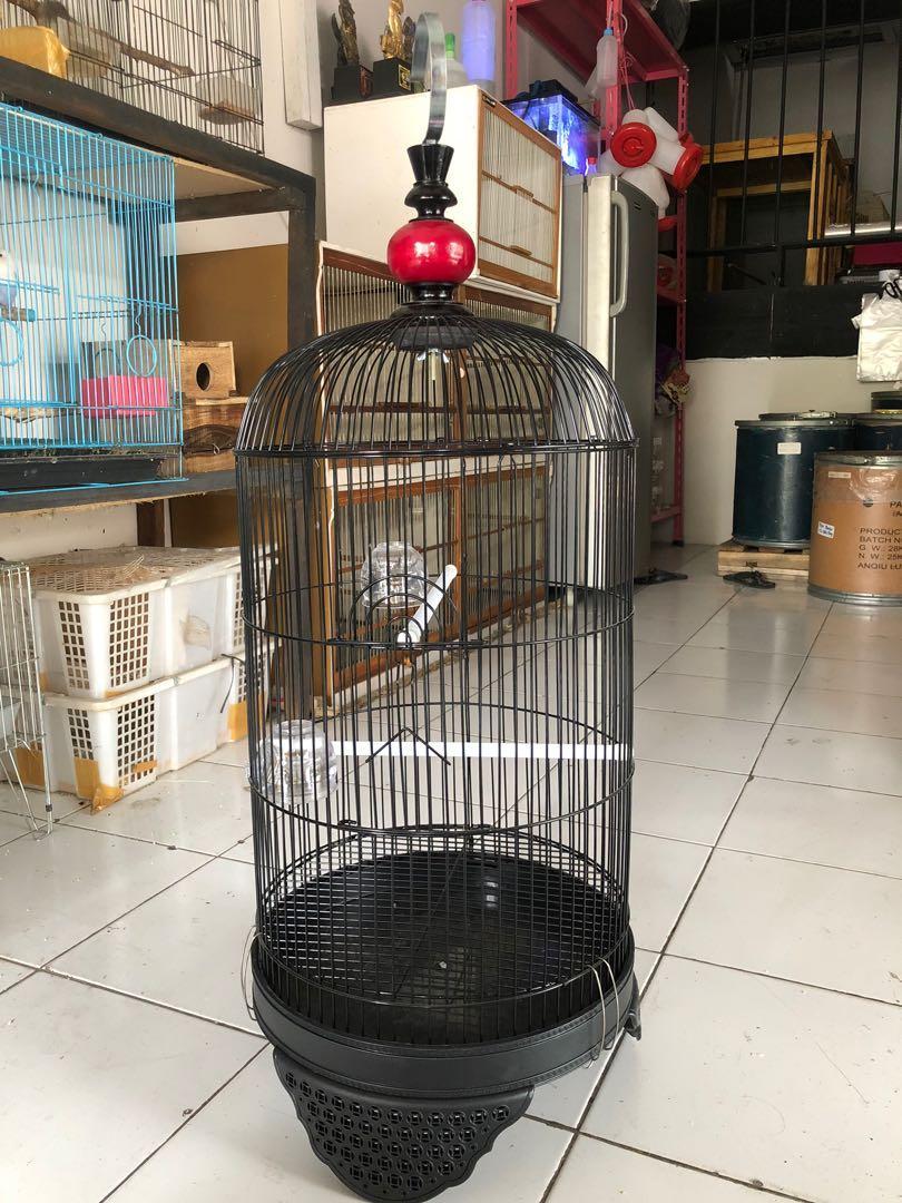 Kandang Love Bird CC
