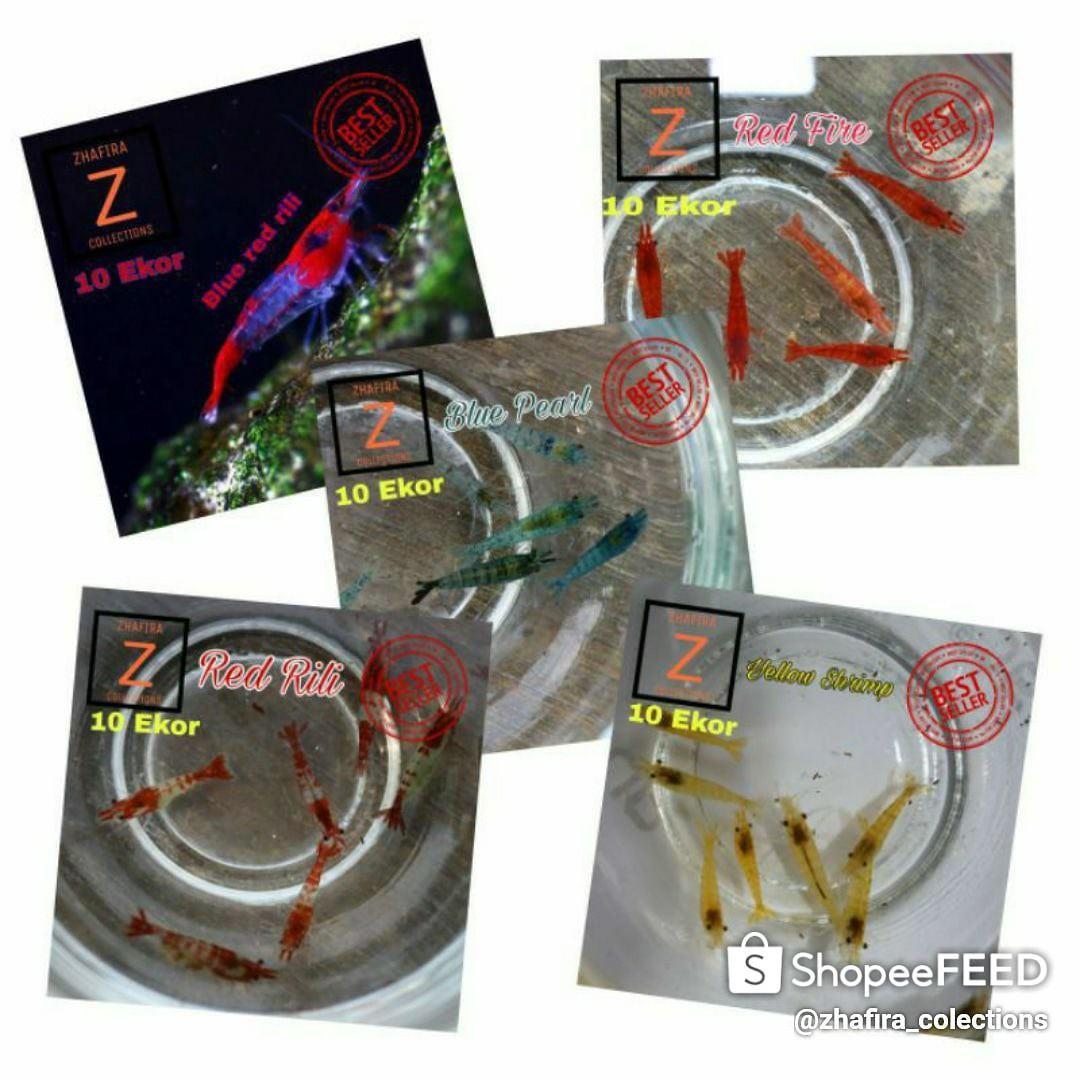 Udang hias paket 5 jenis