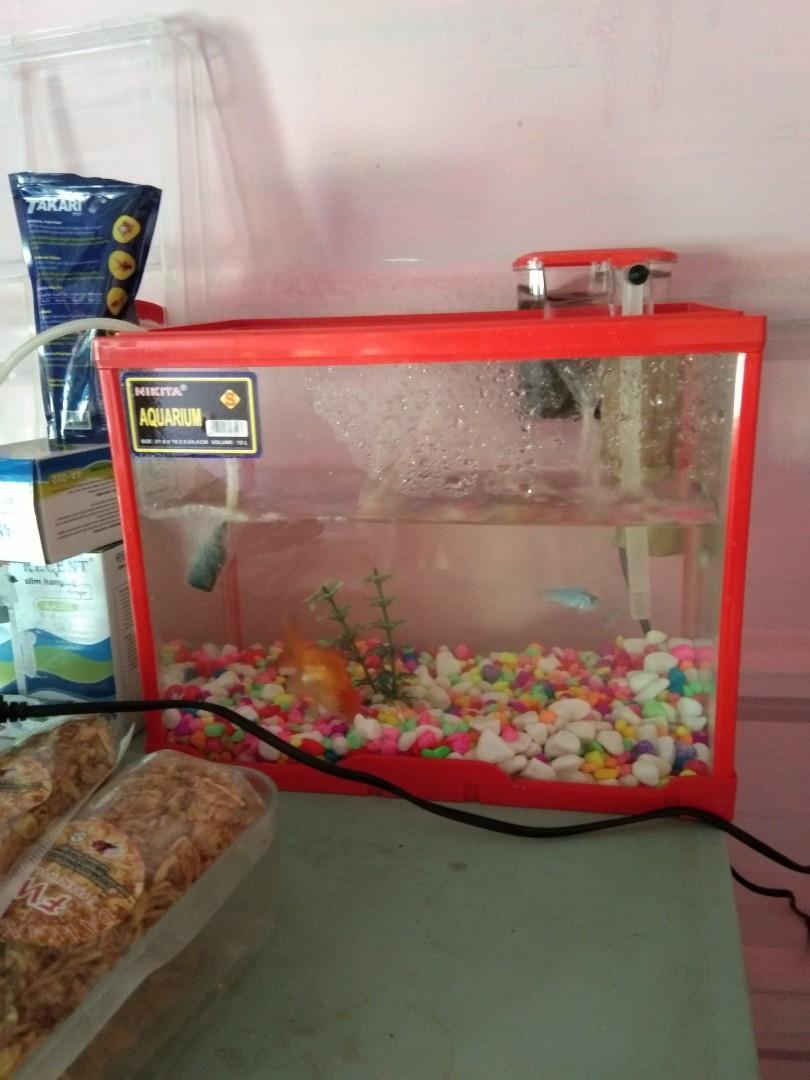 Aquarium akrilik