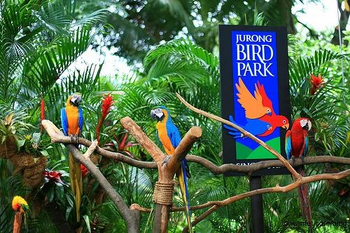 I Bird Park cheap ticket with Tram ride discount Zoo River Safari Night Safari Aquarium Universal studios adventure cove cable car garden by the bay sky park trick eye madam tussauds cable car