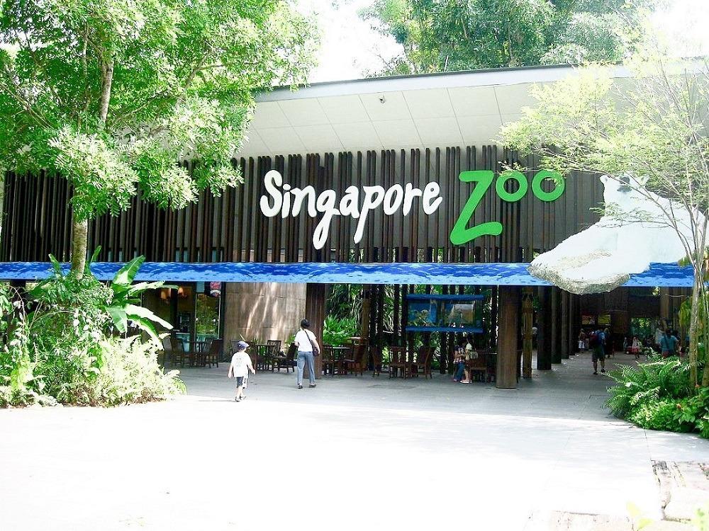 N Zoo cheap ticket with Tram ride discount Singapore Bird Park River Safari Night Safari Aquarium Universal studios adventure cove cable car garden by the bay sky park trick eye madam tussauds cable car head rock vr