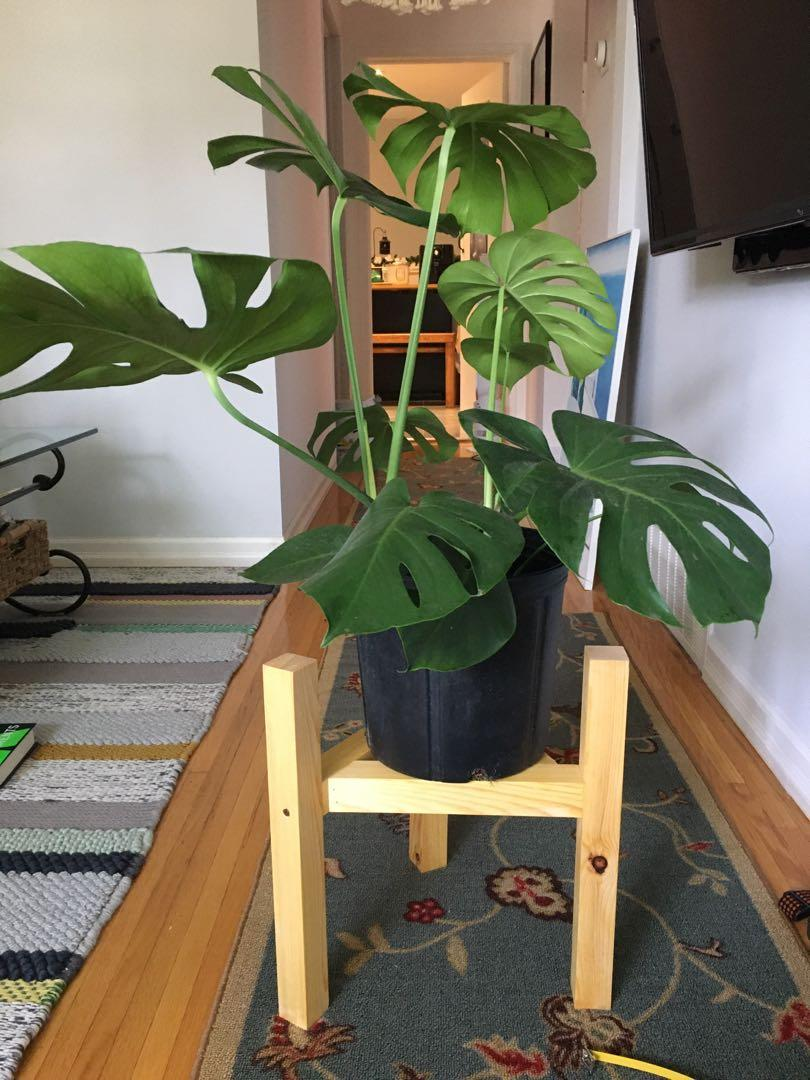 Home made plant stand