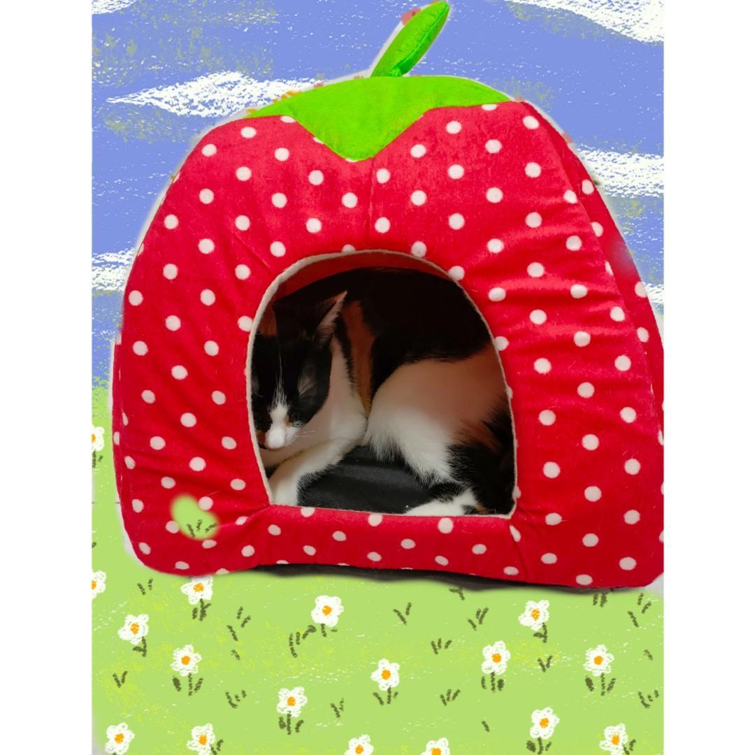 草莓貓窩 🐱