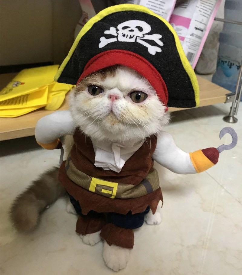 Halloween Costumes for you Pet!
