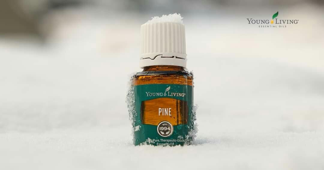Pine Young Living
