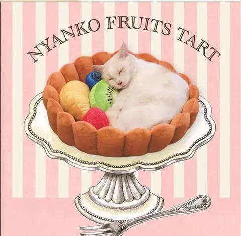 貓咪狗狗水果蛋撻寵物店