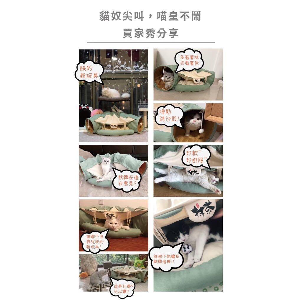 貓隧道拍網貓照最可愛🐱