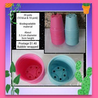Succulent cactus pots (for seed germination  also)
