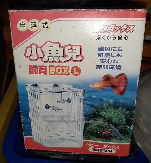 仔魚 隔離盒 孵育盒 孵化盒 繁殖盒