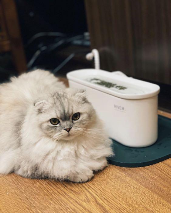 犬貓飲水機。River陶瓷飲水機。全新