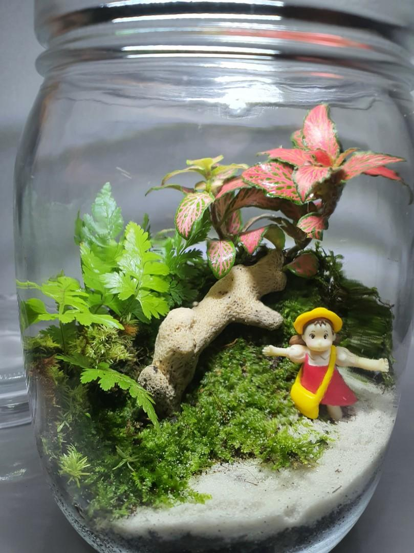 2 X Christmas Gift Covered Bottle Terrariums With Live Moss Gardening Plants On Carousell