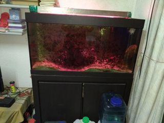 中大型魚缸 正常使用 可議價
