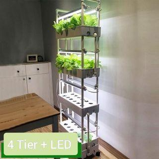 hydroponic system indoor | Gardening | Carousell Singapore
