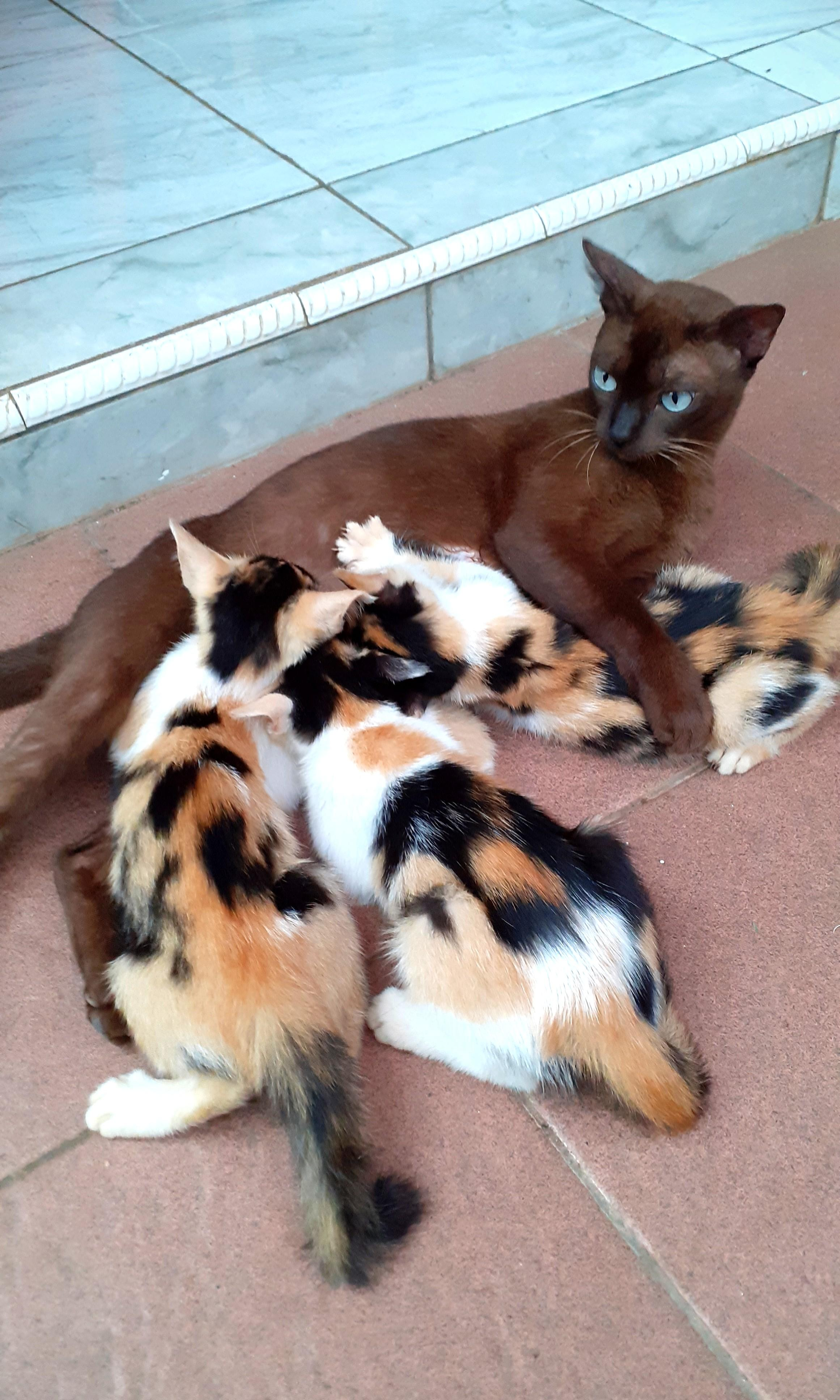 Free Adopt Anak Kucing Kampung Perlengkapan Hewan Makanan Hewan Di Carousell