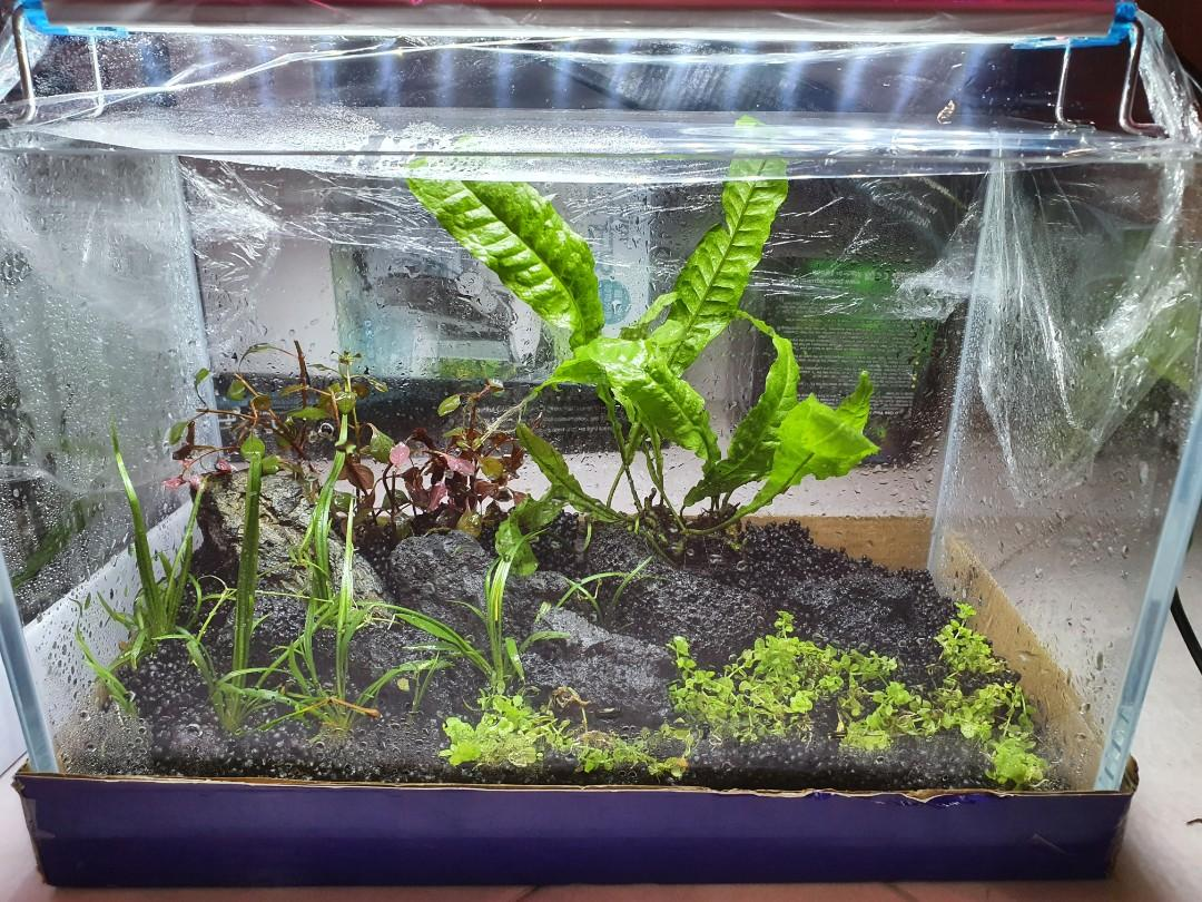 Aquascape Setup For Sale Pet Supplies For Fish Fish Tanks On Carousell