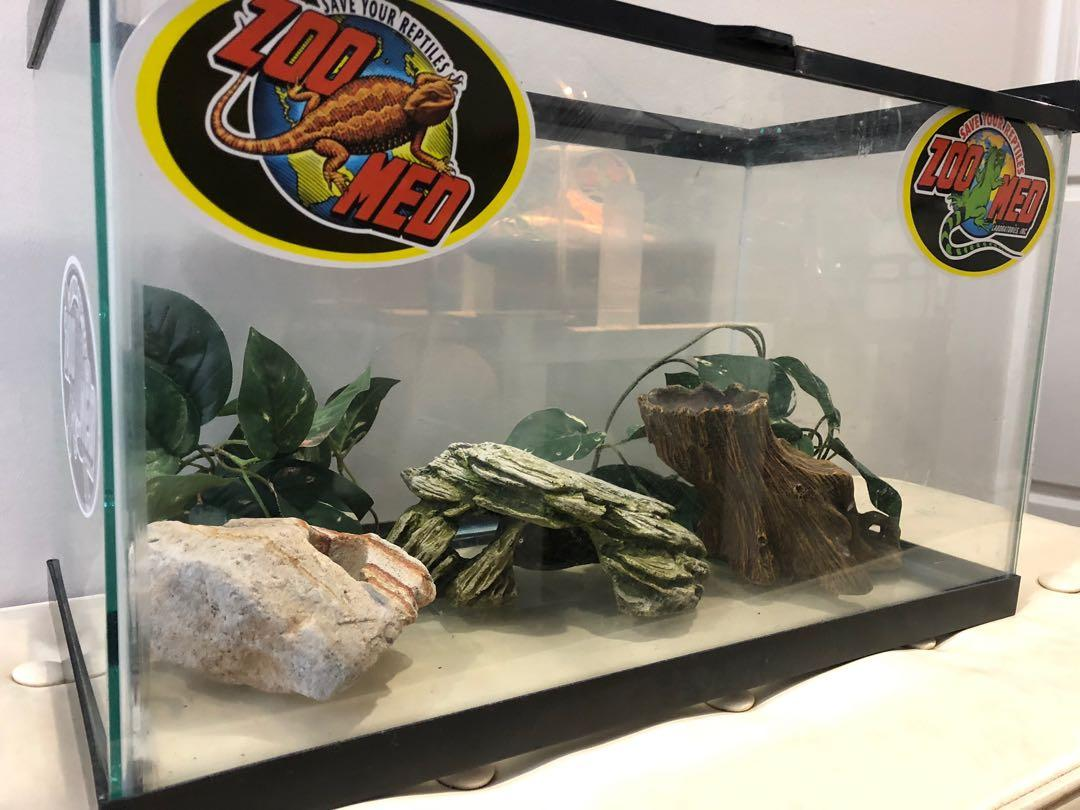 20gal terrarium for geckos or small dragon Excellent condition and some accessories in it