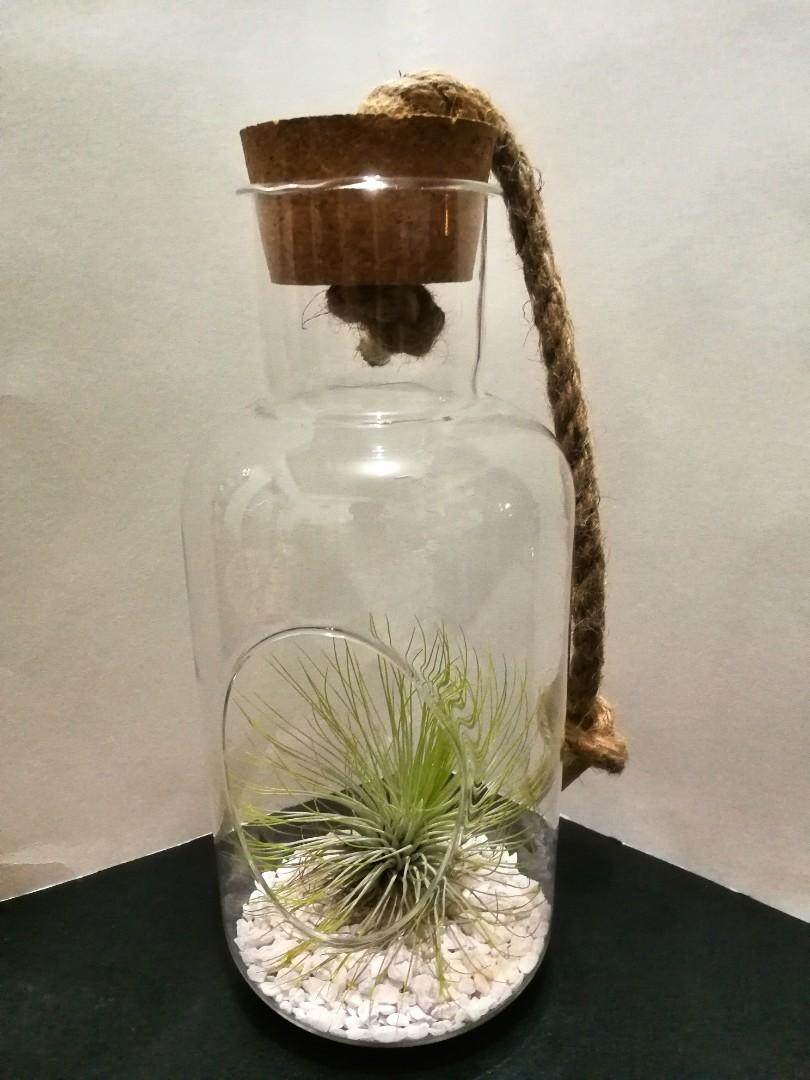 Air Plant Glass Terrarium With Cork Lid Gardening Flowers Plants On Carousell