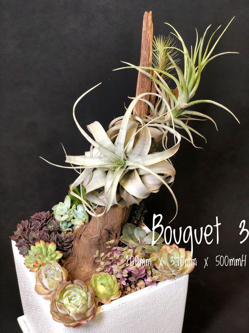 Bouquet 3 Airplant Tillandsia Xerographica Driftwood And Succulents In A Large Cubic Pot Design Craft Handmade Craft On Carousell