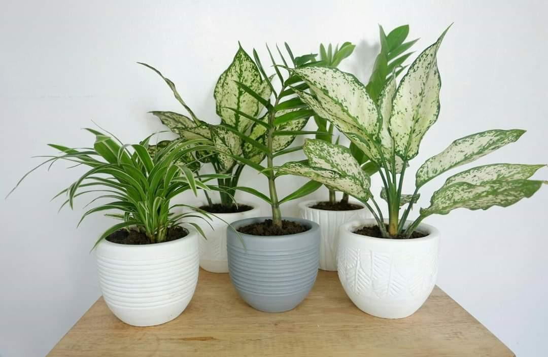 Seasons Collection Plant Pots Size 4x5 Best Use For Your Indoor Plants Gardening Flowers Plants On Carousell