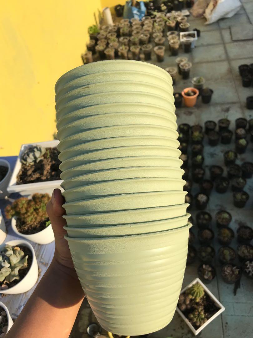 Pot bunga tawon warna matcha