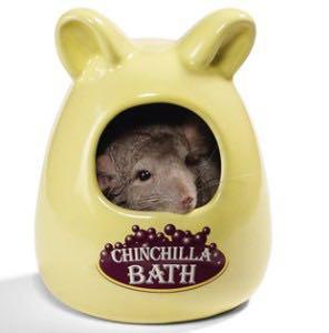 Looking for chinchilla bath
