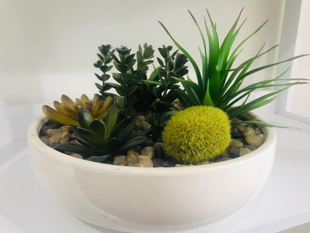 Plant succulent decor