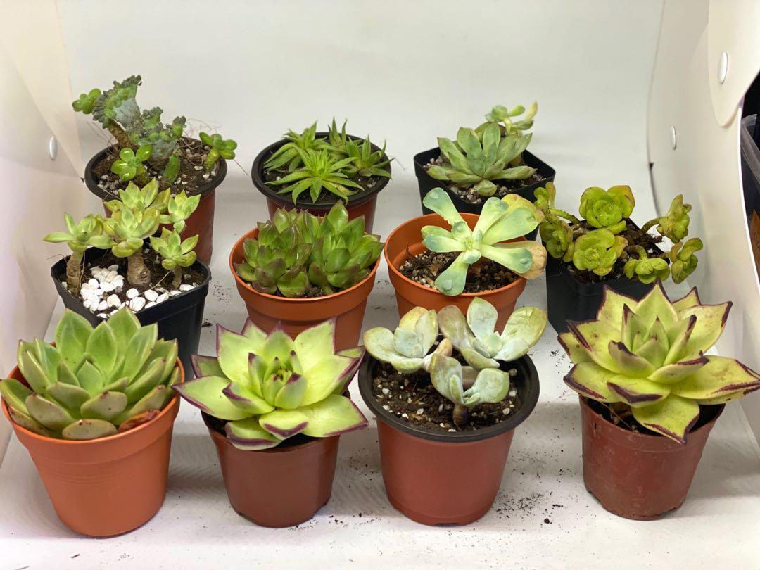 Succulent Terrarium Plant Gardening Plants On Carousell
