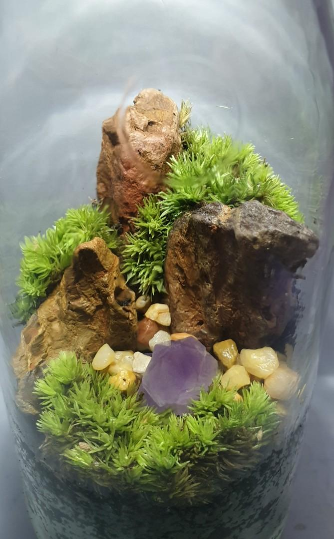 Mini Crystal Landscape Moss Terrarium In A Bottle Gardening Plants On Carousell