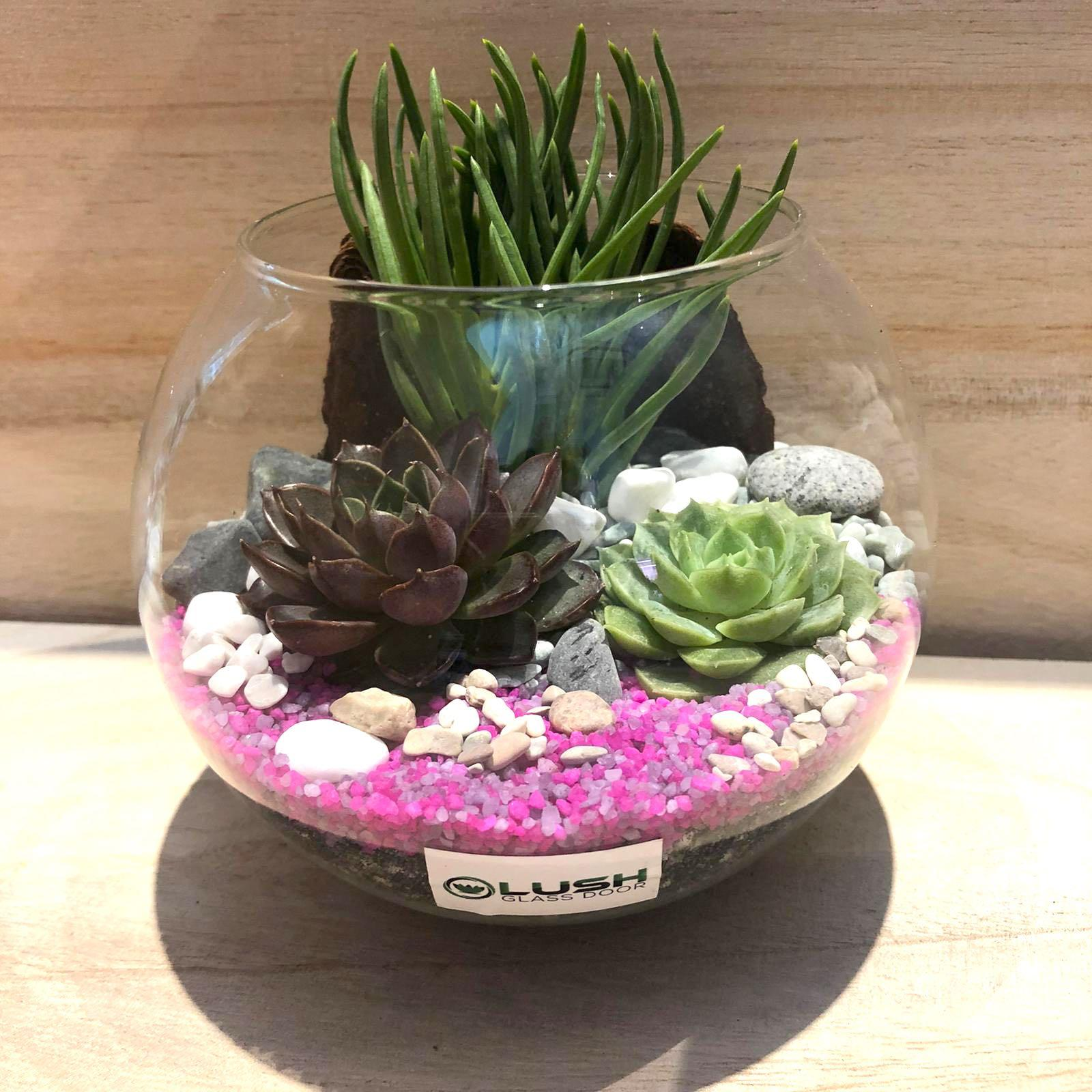 Perfect Gift For Valentines Anniversary Birthday House Warming Christmas Real Succulent Plant Terrarium Gardening Plants On Carousell