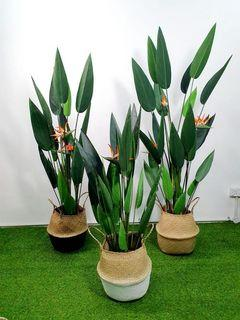 (Delivery) Artificial Plant with pot - Skybird, monstera, banana