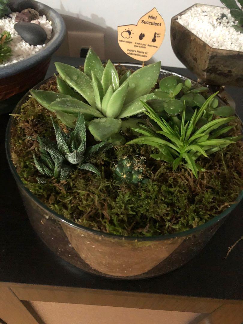 🔥Assorted Succulent - Center piece🔥