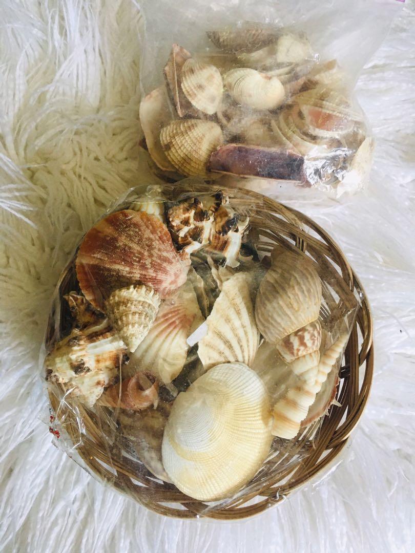Free shells