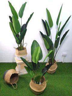 Skgarden   Delicery to your door step   All Artificial Plant with pot start from $25   monstera, banana, skybird, ficus fig, money plant, rubber plant, palm, olive, eucalytus and etc