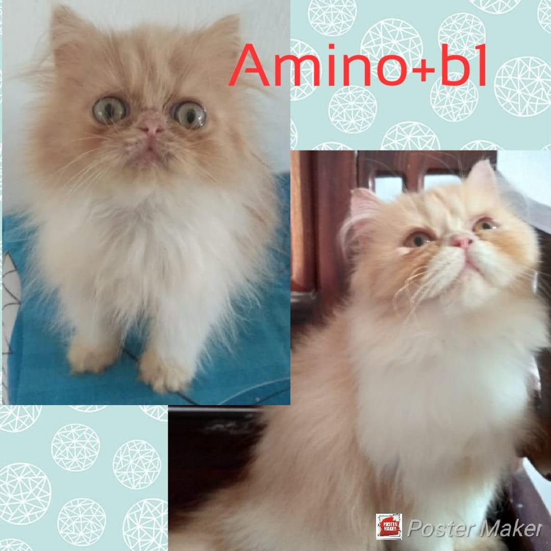 Vitamin Bulu Kucing Nafsu Makan Dan Penggemuk Kucing Uky Amino 100ml Perlengkapan Hewan Makanan Hewan Di Carousell